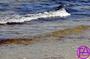 Ein Tag am Strand | www.FeenArt.de | Claudia Böttcher